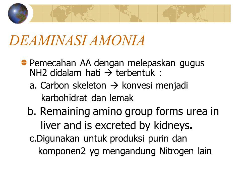 DEAMINASI AMONIA Pemecahan AA dengan melepaskan gugus NH2 didalam hati  terbentuk : a. Carbon skeleton  konvesi menjadi karbohidrat dan lemak b. Rem