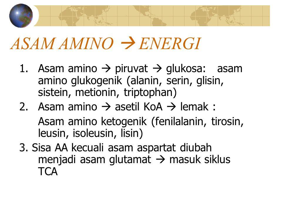 ASAM AMINO  ENERGI 1.Asam amino  piruvat  glukosa: asam amino glukogenik (alanin, serin, glisin, sistein, metionin, triptophan) 2.Asam amino  aset