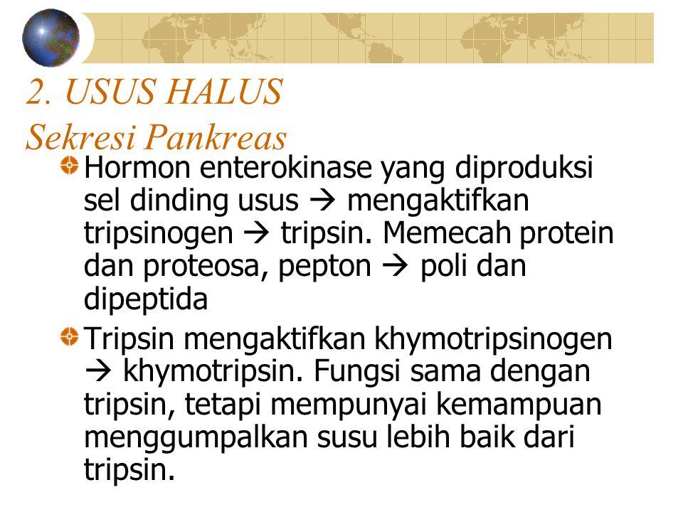 2. USUS HALUS Sekresi Pankreas Hormon enterokinase yang diproduksi sel dinding usus  mengaktifkan tripsinogen  tripsin. Memecah protein dan proteosa