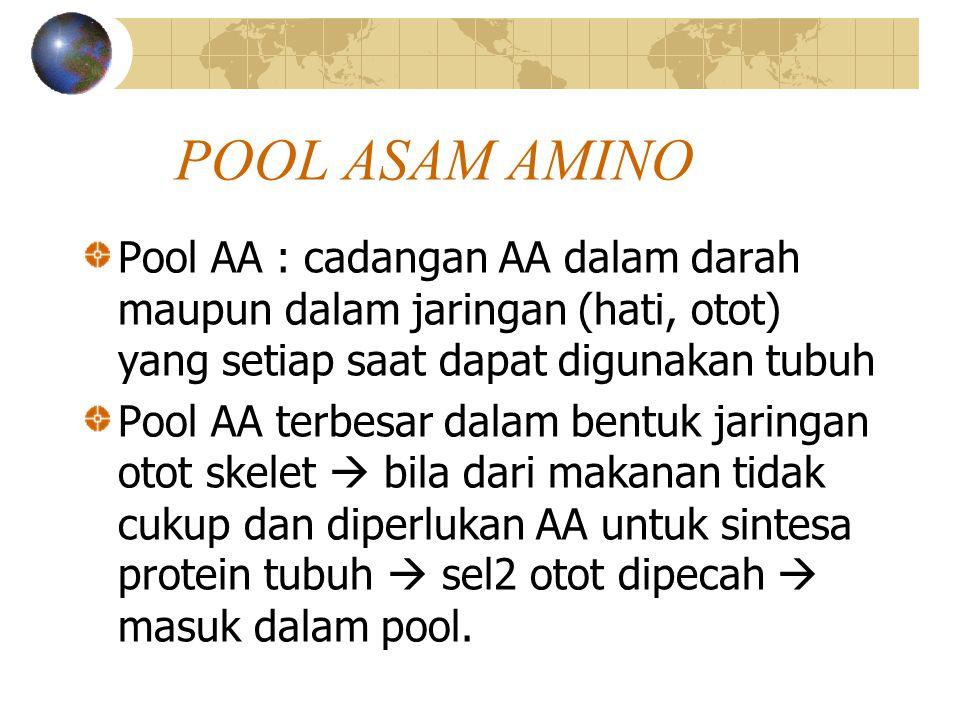 POOL ASAM AMINO Pool AA : cadangan AA dalam darah maupun dalam jaringan (hati, otot) yang setiap saat dapat digunakan tubuh Pool AA terbesar dalam bentuk jaringan otot skelet  bila dari makanan tidak cukup dan diperlukan AA untuk sintesa protein tubuh  sel2 otot dipecah  masuk dalam pool.