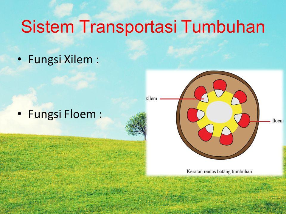 Sistem Transportasi Tumbuhan Fungsi Xilem : Fungsi Floem :
