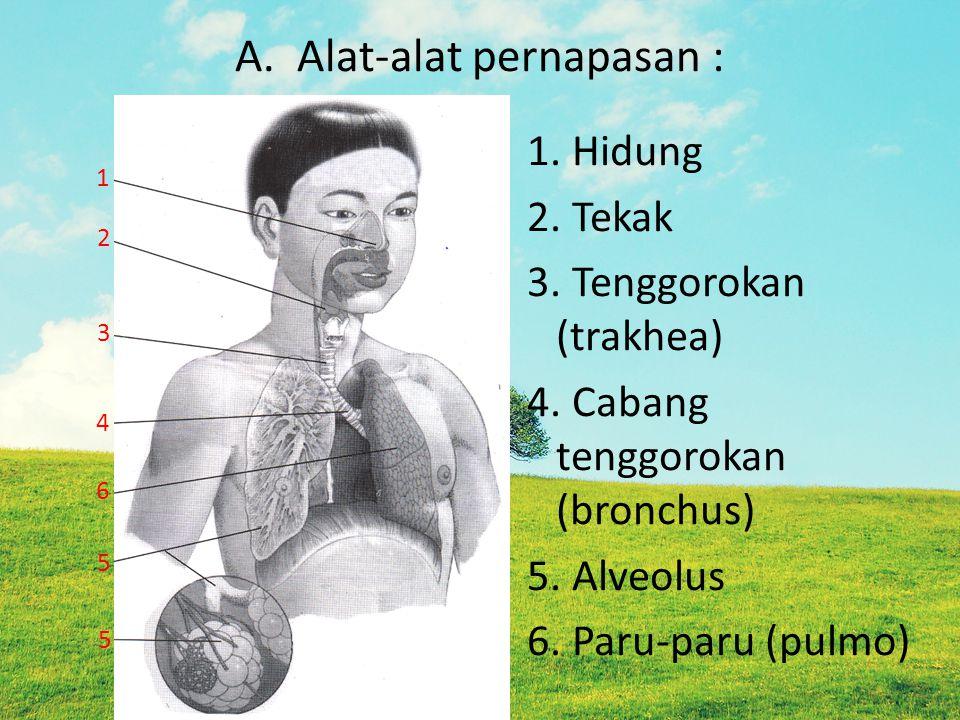 A. Alat-alat pernapasan : 1. Hidung 2. Tekak 3. Tenggorokan (trakhea) 4. Cabang tenggorokan (bronchus) 5. Alveolus 6. Paru-paru (pulmo) 1 2 3 4 6 5 5
