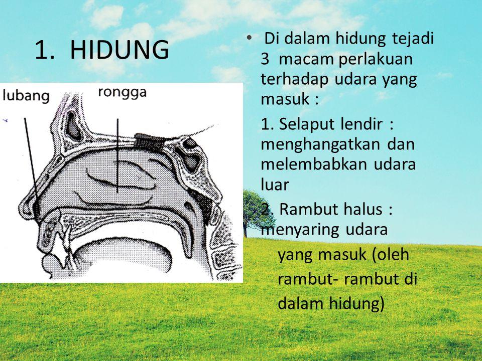 1. HIDUNG Di dalam hidung tejadi 3 macam perlakuan terhadap udara yang masuk : 1. Selaput lendir : menghangatkan dan melembabkan udara luar 2. Rambut