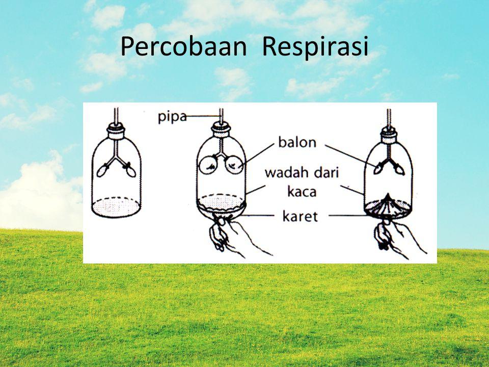 Percobaan Respirasi