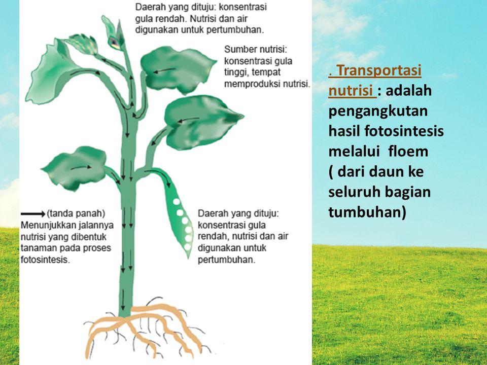 Faktor yang mempengaruhi transportasi pada tumbuhan a.Tekanan akar b.Daya kapilaritas batang a.Kohesi ( sejenis) b.Adhesi (tidak sejenis) c.Daya hisap daun