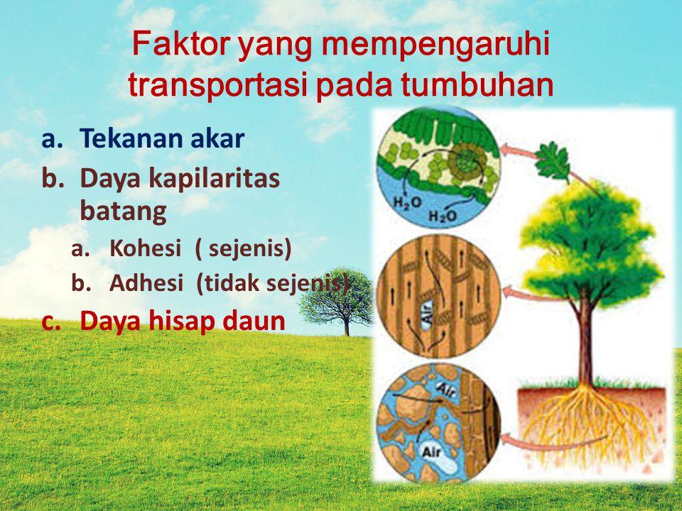 Faktor yang mempengaruhi transportasi pada tumbuhan a.Tekanan akar b.Daya kapilaritas batang a.Kohesi ( sejenis) b.Adhesi (tidak sejenis) c.Daya hisap