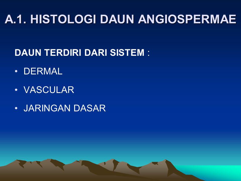 A.1. HISTOLOGI DAUN ANGIOSPERMAE DAUN TERDIRI DARI SISTEM : DERMAL VASCULAR JARINGAN DASAR