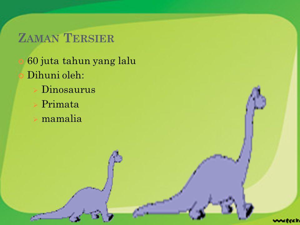 Z AMAN T ERSIER 60 juta tahun yang lalu Dihuni oleh:  Dinosaurus  Primata  mamalia