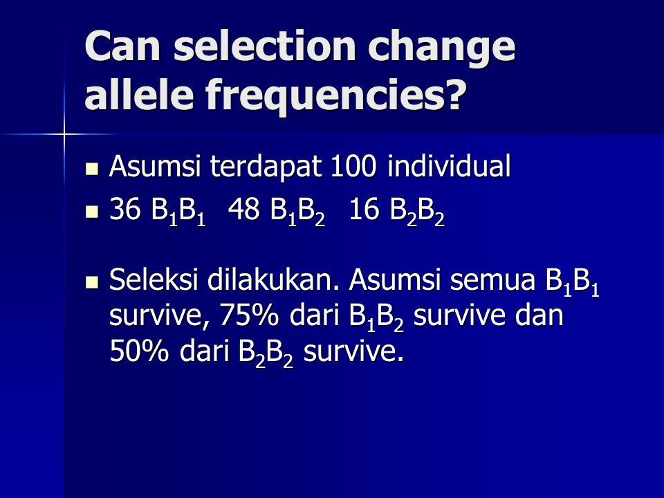 Can selection change allele frequencies? Asumsi terdapat 100 individual Asumsi terdapat 100 individual 36 B 1 B 1 48 B 1 B 2 16 B 2 B 2 36 B 1 B 1 48
