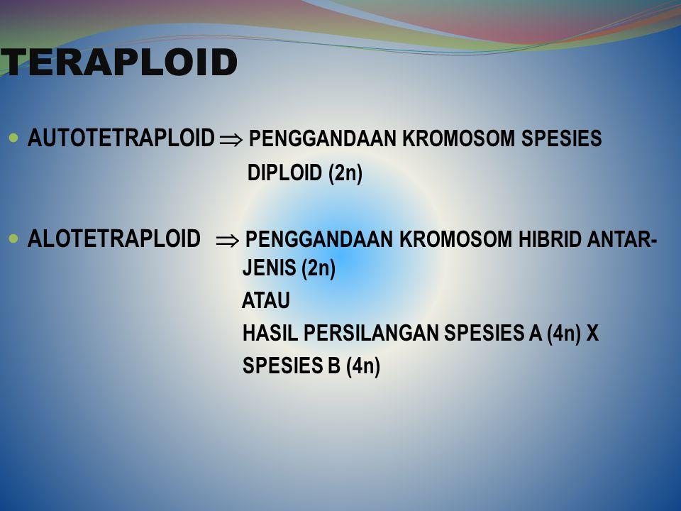 TERAPLOID AUTOTETRAPLOID  PENGGANDAAN KROMOSOM SPESIES DIPLOID (2n) ALOTETRAPLOID  PENGGANDAAN KROMOSOM HIBRID ANTAR- JENIS (2n) ATAU HASIL PERSILAN