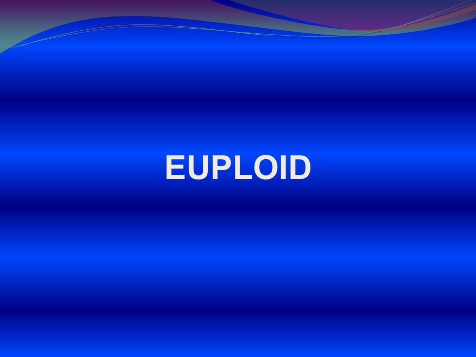 EUPLOID