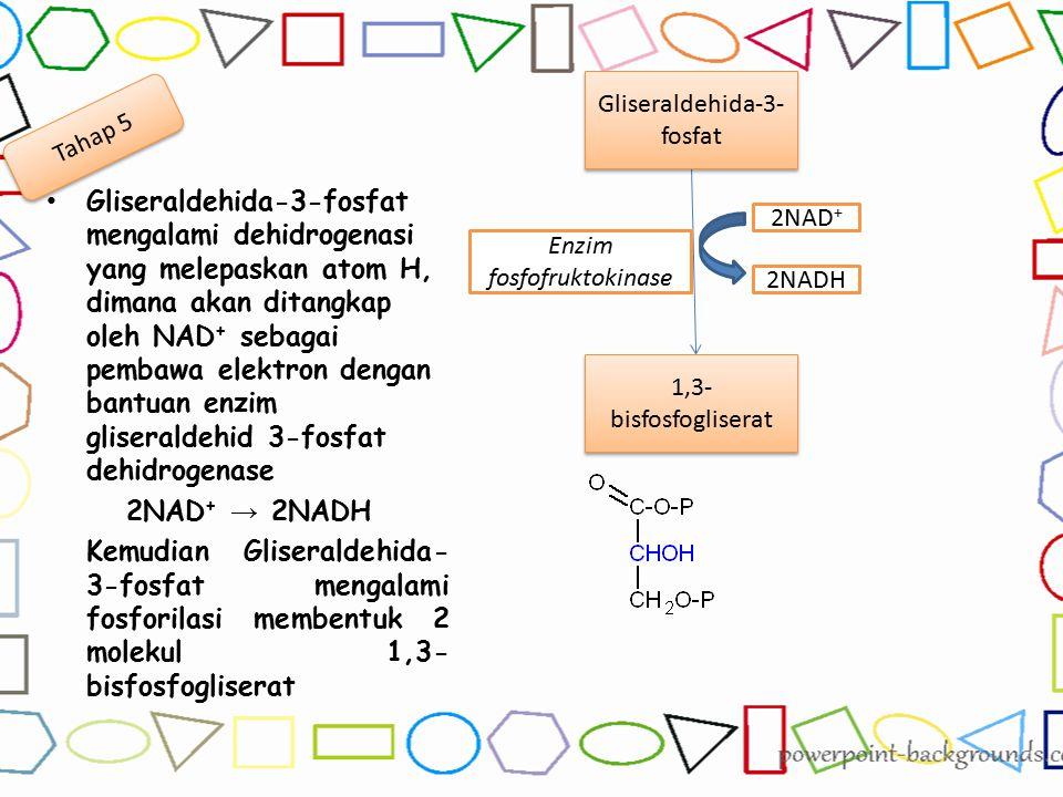 Gliseraldehida-3-fosfat mengalami dehidrogenasi yang melepaskan atom H, dimana akan ditangkap oleh NAD + sebagai pembawa elektron dengan bantuan enzim