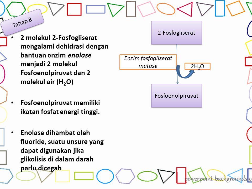 2 molekul 2-Fosfogliserat mengalami dehidrasi dengan bantuan enzim enolase menjadi 2 molekul Fosfoenolpiruvat dan 2 molekul air (H 2 O) Fosfoenolpiruv