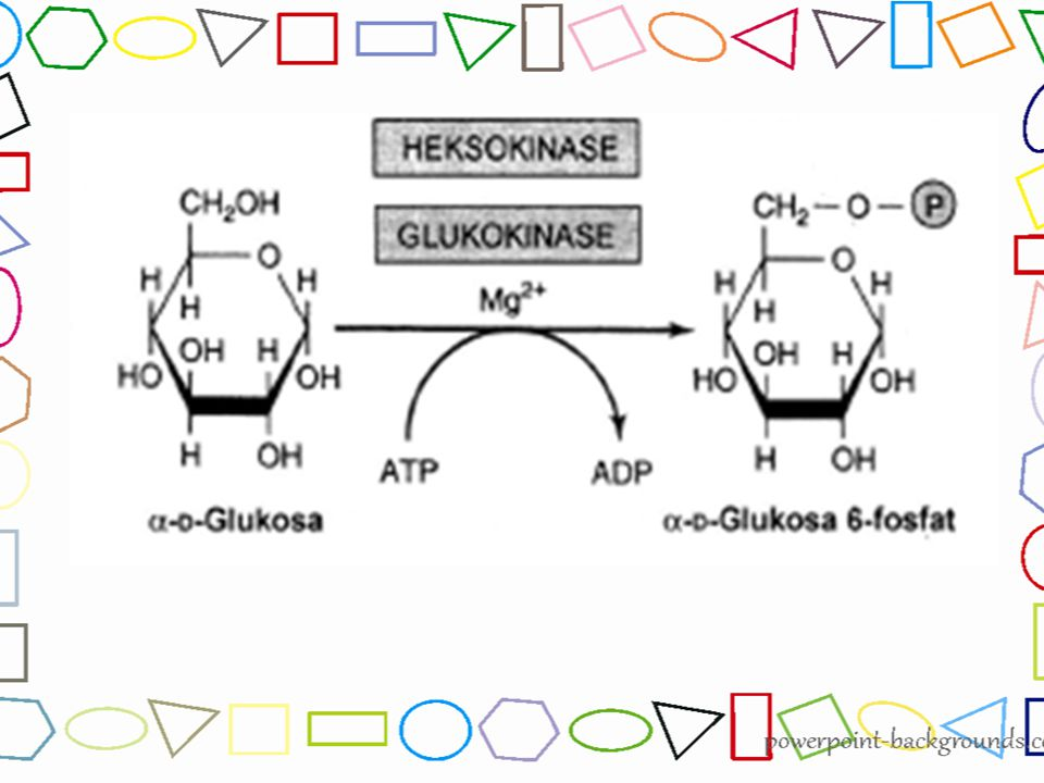 Gliseraldehida-3-fosfat mengalami dehidrogenasi yang melepaskan atom H, dimana akan ditangkap oleh NAD + sebagai pembawa elektron dengan bantuan enzim gliseraldehid 3-fosfat dehidrogenase 2NAD + → 2NADH Kemudian Gliseraldehida- 3-fosfat mengalami fosforilasi membentuk 2 molekul 1,3- bisfosfogliserat 1,3- bisfosfogliserat 2NAD + 2NADH Enzim fosfofruktokinase Gliseraldehida-3- fosfat Tahap 5