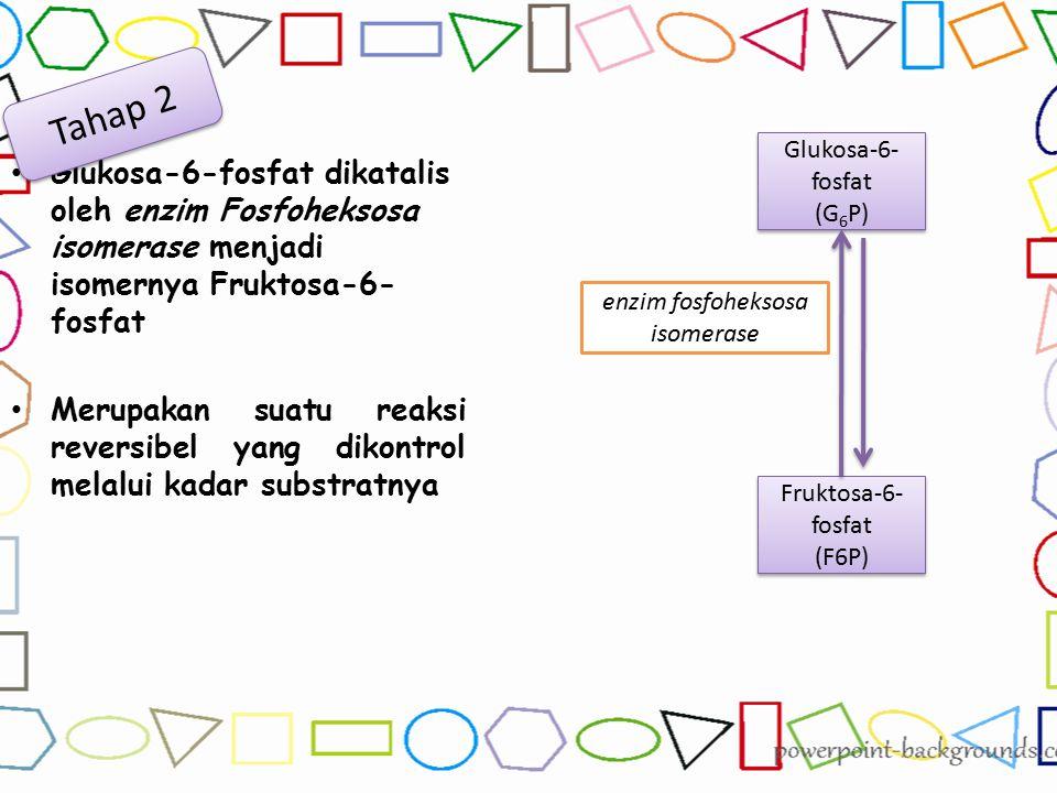 Glukosa-6-fosfat dikatalis oleh enzim Fosfoheksosa isomerase menjadi isomernya Fruktosa-6- fosfat Merupakan suatu reaksi reversibel yang dikontrol mel