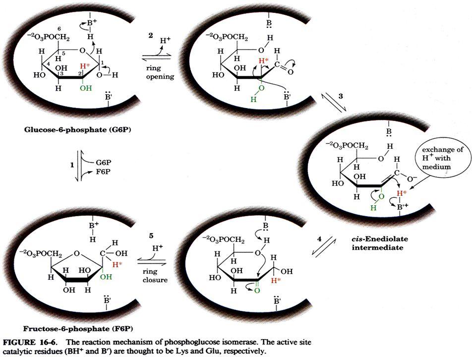 Fruktosa-6-fosfat mengalami fosforilasi ke 2 yang berasal dari penguraian ATP → ADP Dengan bantuan katalisis oleh enzim fosfofruktokinase menjadi Fruktosa-1,6- bisfosfat Fruktosa-1,6- bisfosfat ATP ADP Enzim fosfofruktokinase Fruktosa-6- fosfat Tahap 3