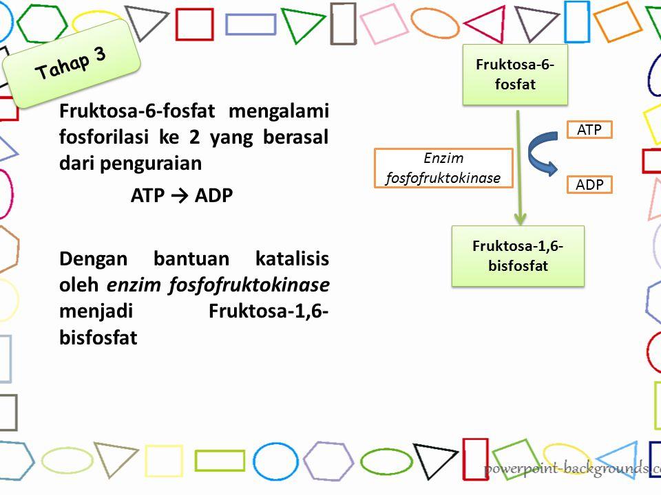 Fruktosa-6-fosfat mengalami fosforilasi ke 2 yang berasal dari penguraian ATP → ADP Dengan bantuan katalisis oleh enzim fosfofruktokinase menjadi Fruk
