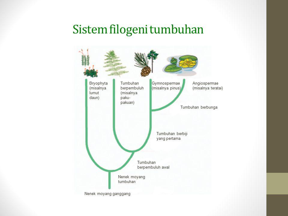 Sistem filogeni tumbuhan Bryophyta (misalnya lumut daun) Tumbuhan berpembuluh (misalnya paku- pakuan) Gymnospermae (misalnya pinus) Angiospermae (misa