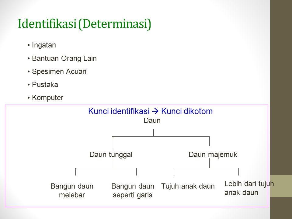 Identifikasi (Determinasi) Ingatan Bantuan Orang Lain Spesimen Acuan Pustaka Komputer Kunci identifikasi  Kunci dikotom Daun Daun tunggalDaun majemuk