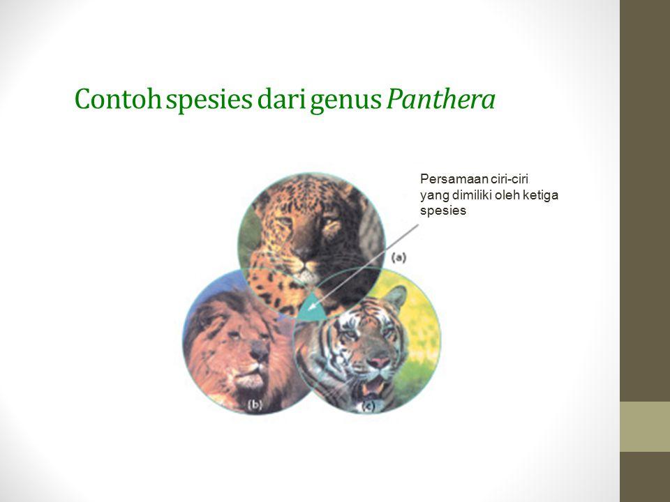 Contoh spesies dari genus Panthera Persamaan ciri-ciri yang dimiliki oleh ketiga spesies