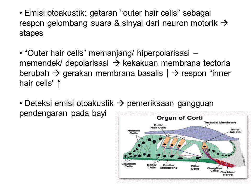 Emisi otoakustik: getaran outer hair cells sebagai respon gelombang suara & sinyal dari neuron motorik  stapes Outer hair cells memanjang/ hiperpolarisasi – memendek/ depolarisasi  kekakuan membrana tectoria berubah  gerakan membrana basalis  respon inner hair cells Deteksi emisi otoakustik  pemeriksaan gangguan pendengaran pada bayi