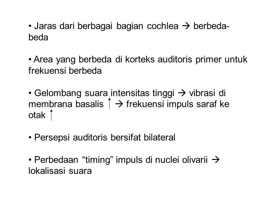 Jaras dari berbagai bagian cochlea  berbeda- beda Area yang berbeda di korteks auditoris primer untuk frekuensi berbeda Gelombang suara intensitas tinggi  vibrasi di membrana basalis  frekuensi impuls saraf ke otak Persepsi auditoris bersifat bilateral Perbedaan timing impuls di nuclei olivarii  lokalisasi suara