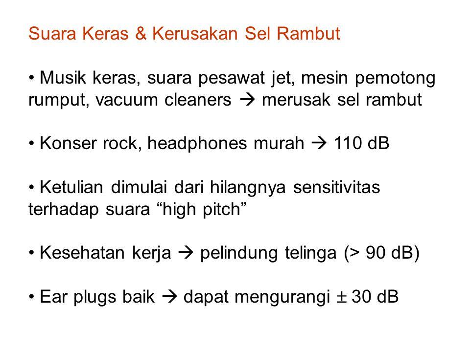 Suara Keras & Kerusakan Sel Rambut Musik keras, suara pesawat jet, mesin pemotong rumput, vacuum cleaners  merusak sel rambut Konser rock, headphones murah  110 dB Ketulian dimulai dari hilangnya sensitivitas terhadap suara high pitch Kesehatan kerja  pelindung telinga (> 90 dB) Ear plugs baik  dapat mengurangi  30 dB