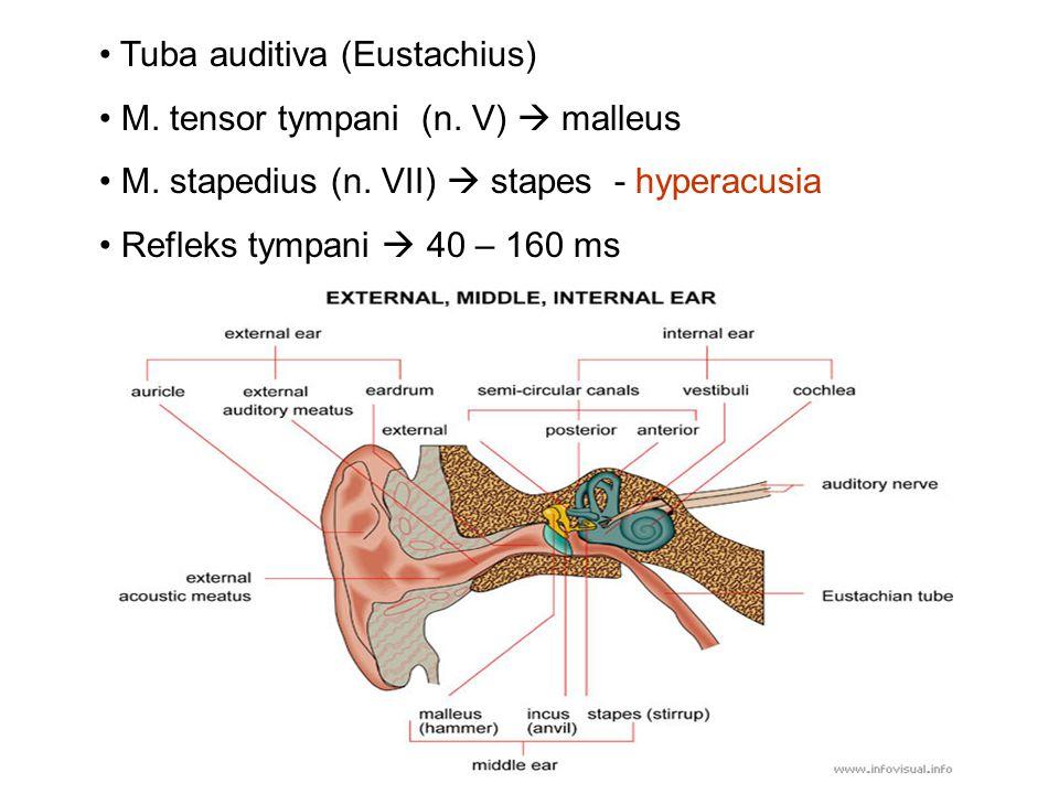 Tuba auditiva (Eustachius) M. tensor tympani (n. V)  malleus M. stapedius (n. VII)  stapes - hyperacusia Refleks tympani  40 – 160 ms