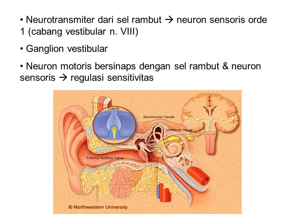 Neurotransmiter dari sel rambut  neuron sensoris orde 1 (cabang vestibular n.