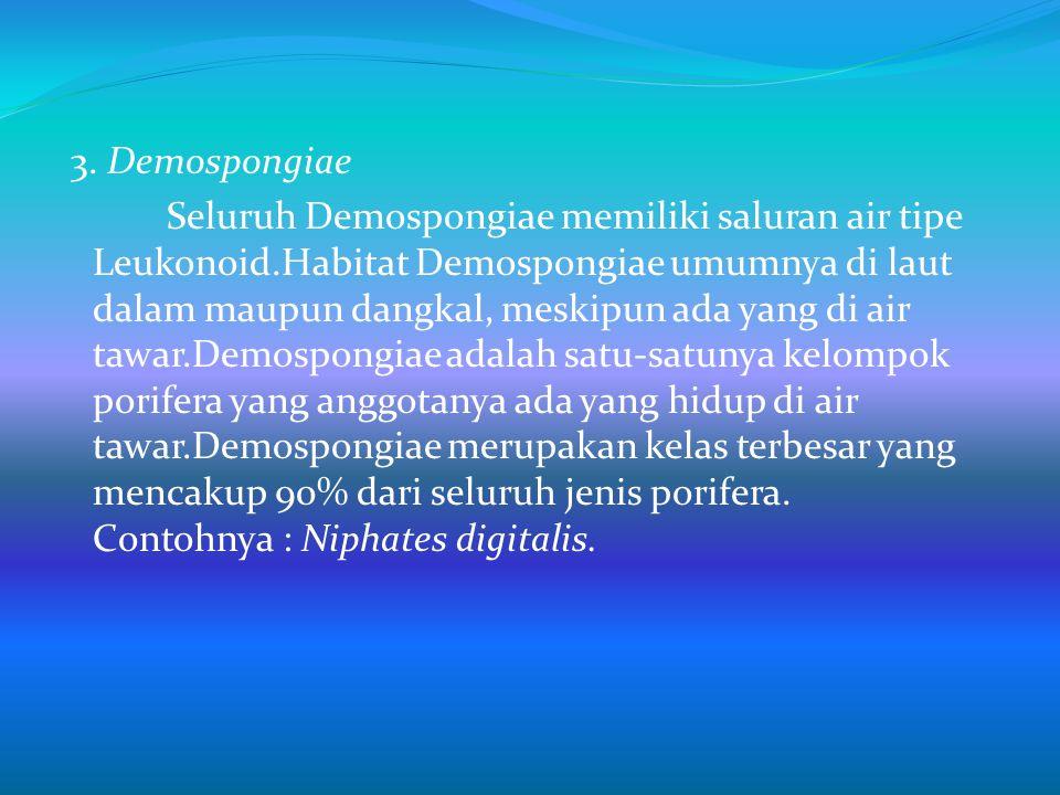 3. Demospongiae Seluruh Demospongiae memiliki saluran air tipe Leukonoid.Habitat Demospongiae umumnya di laut dalam maupun dangkal, meskipun ada yang