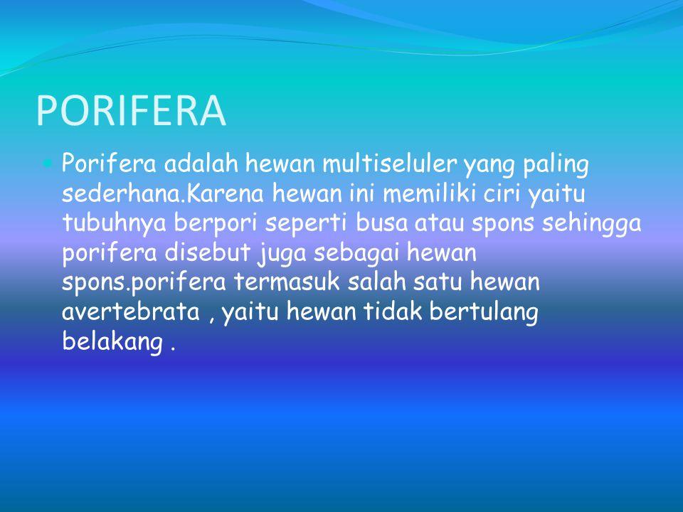 PORIFERA Porifera adalah hewan multiseluler yang paling sederhana.Karena hewan ini memiliki ciri yaitu tubuhnya berpori seperti busa atau spons sehing