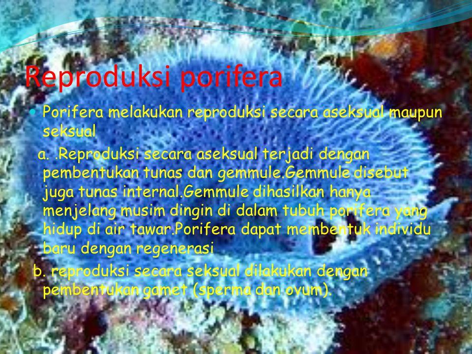 Reproduksi porifera Porifera melakukan reproduksi secara aseksual maupun seksual a.. Reproduksi secara aseksual terjadi dengan pembentukan tunas dan g