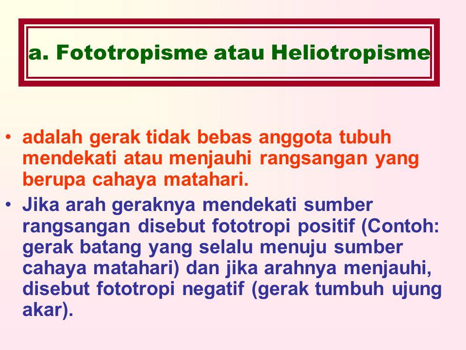 a. Fototropisme atau Heliotropisme adalah gerak tidak bebas anggota tubuh mendekati atau menjauhi rangsangan yang berupa cahaya matahari. Jika arah ge