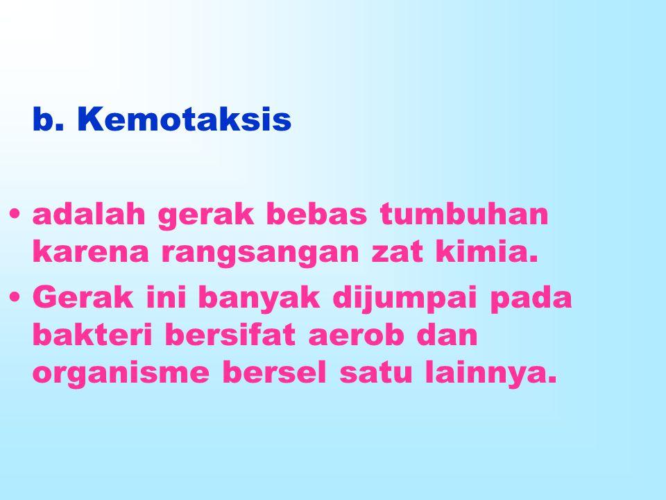 b. Kemotaksis adalah gerak bebas tumbuhan karena rangsangan zat kimia. Gerak ini banyak dijumpai pada bakteri bersifat aerob dan organisme bersel satu