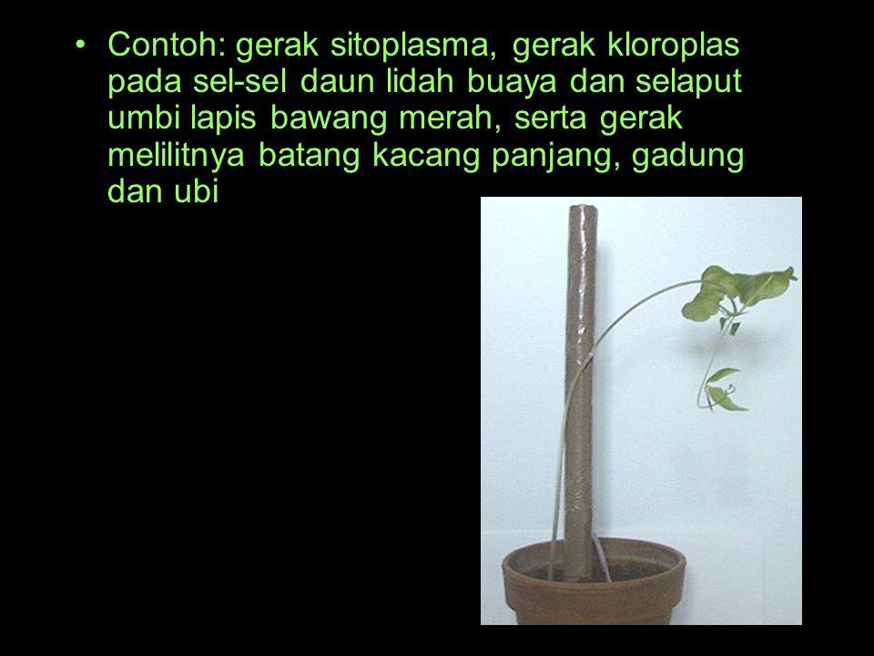 Contoh: gerak sitoplasma, gerak kloroplas pada sel-sel daun lidah buaya dan selaput umbi lapis bawang merah, serta gerak melilitnya batang kacang panj