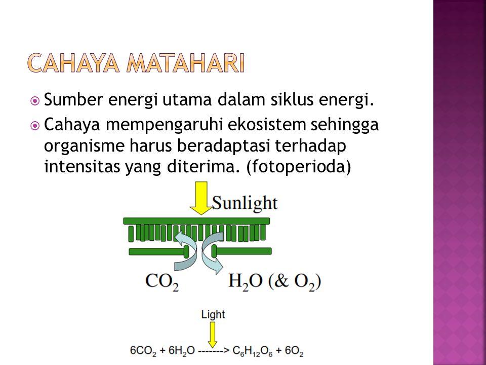  Sumber energi utama dalam siklus energi.  Cahaya mempengaruhi ekosistem sehingga organisme harus beradaptasi terhadap intensitas yang diterima. (fo