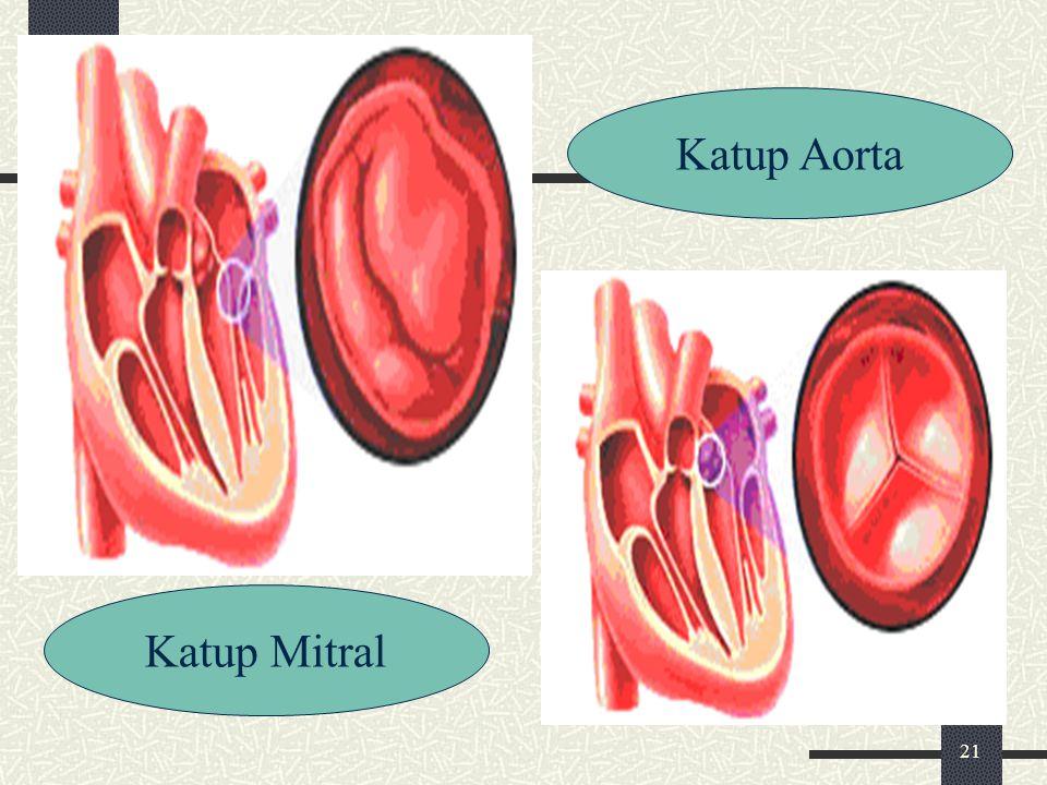 21 Katup Mitral Katup Aorta