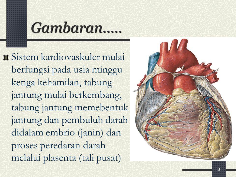 Gambaran..… Sistem kardiovaskuler mulai berfungsi pada usia minggu ketiga kehamilan, tabung jantung mulai berkembang, tabung jantung memebentuk jantun