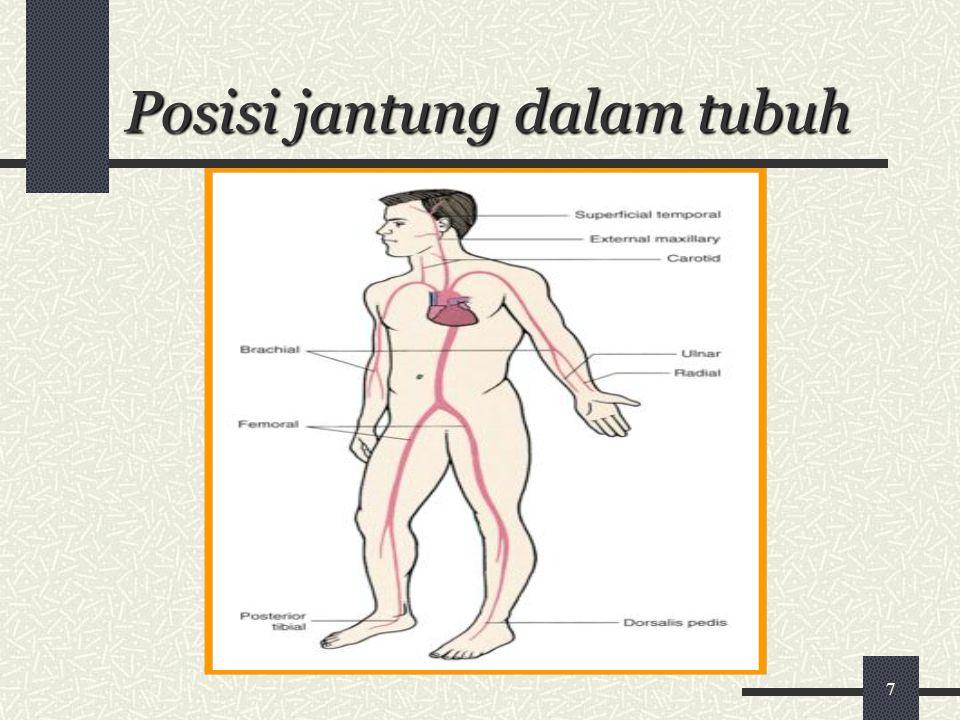 7 Posisi jantung dalam tubuh