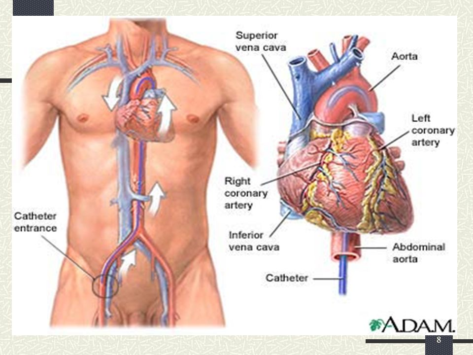 9 Anatomi…..