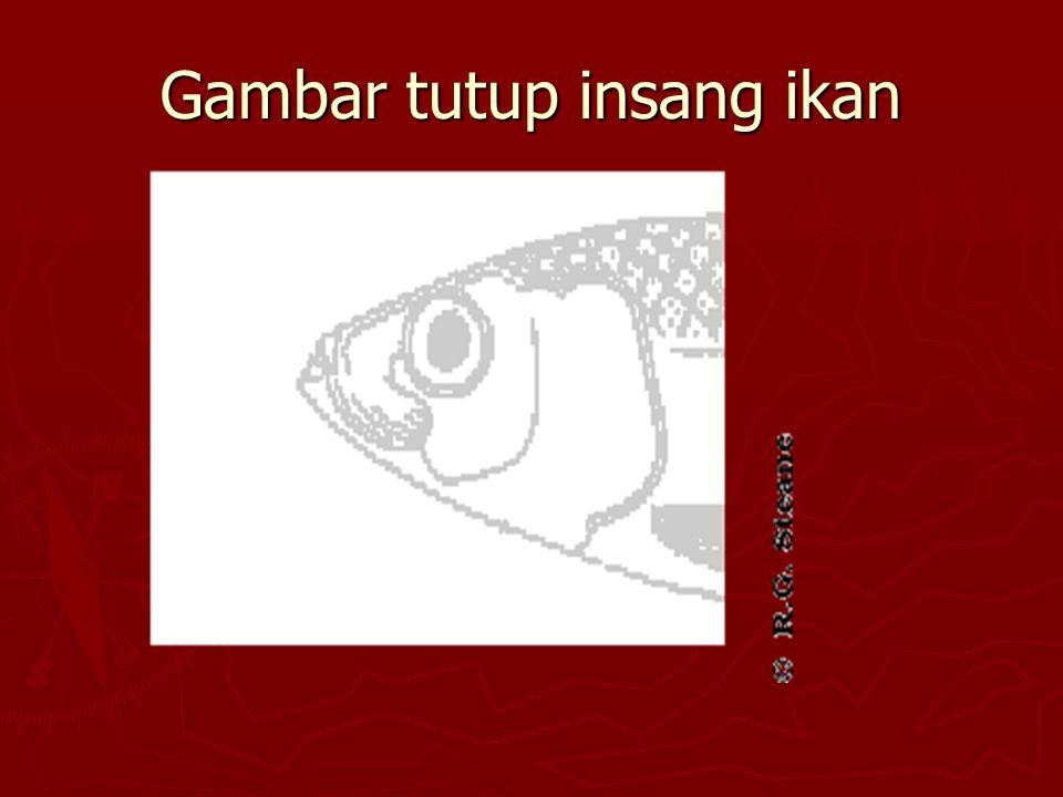 Gambar tutup insang ikan