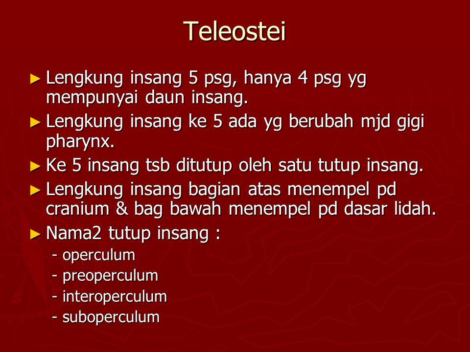 Teleostei ► Lengkung insang 5 psg, hanya 4 psg yg mempunyai daun insang.