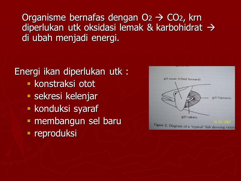 Energi ikan diperlukan utk :  konstraksi otot  sekresi kelenjar  konduksi syaraf  membangun sel baru  reproduksi Organisme bernafas dengan O 2  CO 2, krn diperlukan utk oksidasi lemak & karbohidrat  di ubah menjadi energi.