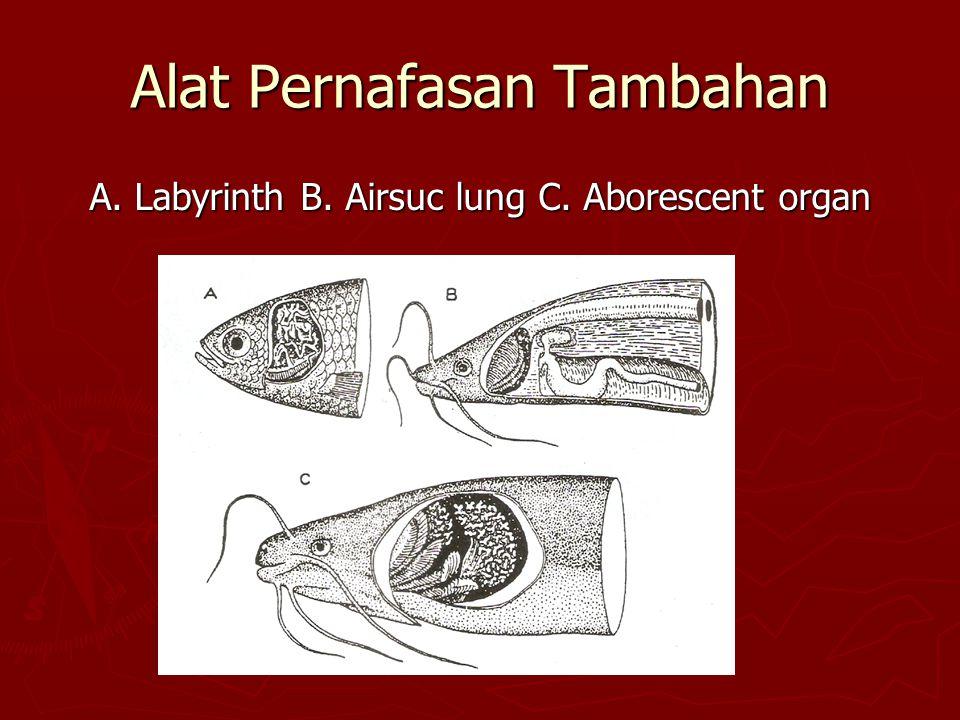 Alat Pernafasan Tambahan A. Labyrinth B. Airsuc lung C. Aborescent organ