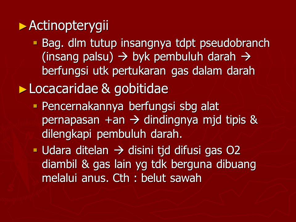 ► Actinopterygii  Bag.