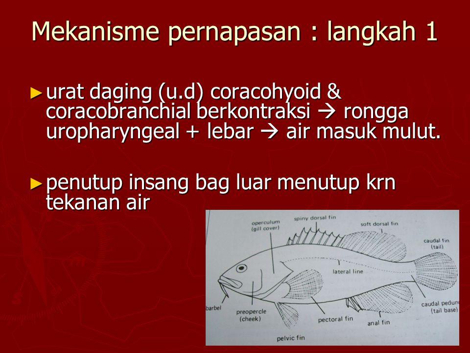 Gelembung gas pada bbrp jenis ikan
