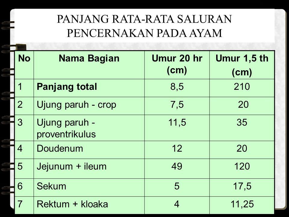 PANJANG RATA-RATA SALURAN PENCERNAKAN PADA AYAM NoNama BagianUmur 20 hr (cm) Umur 1,5 th (cm) 1Panjang total8,5210 2Ujung paruh - crop7,5 20 3Ujung pa