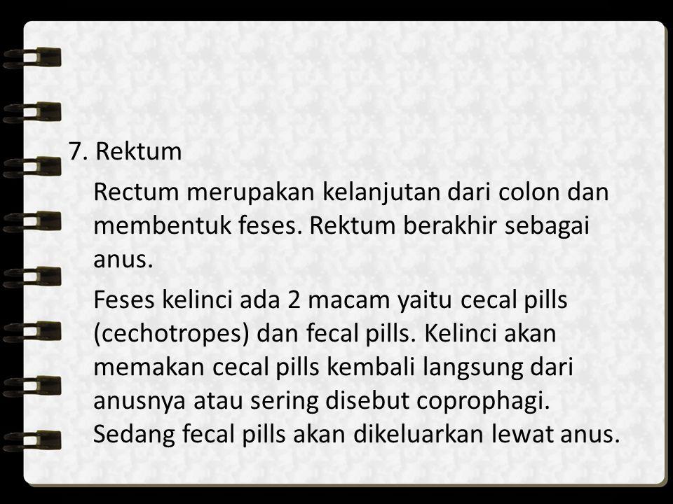 7. Rektum Rectum merupakan kelanjutan dari colon dan membentuk feses. Rektum berakhir sebagai anus. Feses kelinci ada 2 macam yaitu cecal pills (cecho