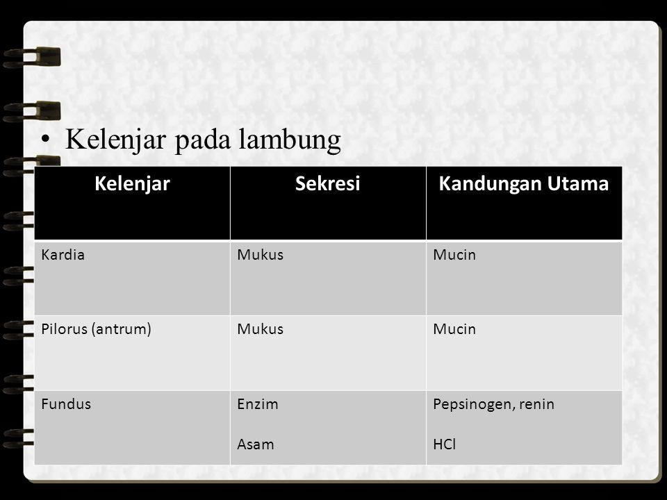 4.Usus Halus a.