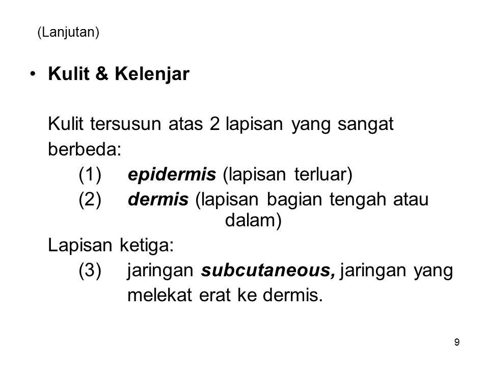 (Lanjutan) Kulit & Kelenjar Kulit tersusun atas 2 lapisan yang sangat berbeda: (1)epidermis (lapisan terluar) (2)dermis (lapisan bagian tengah atau dalam) Lapisan ketiga: (3) jaringan subcutaneous, jaringan yang melekat erat ke dermis.